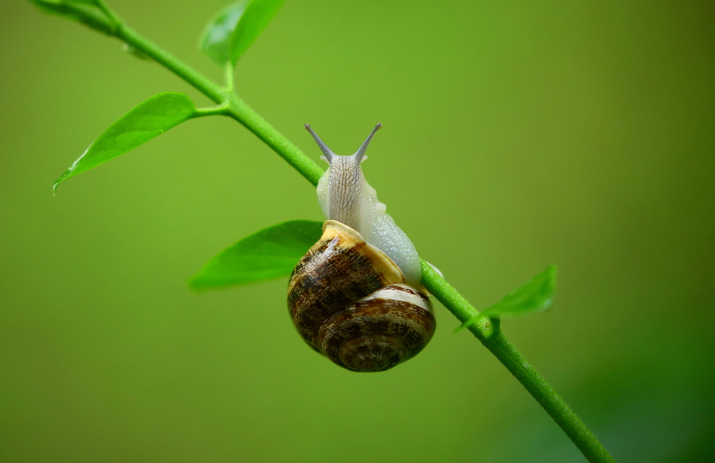 SCA Growth Factor: Are Snails the Secret to Smoother, Softer Skin?